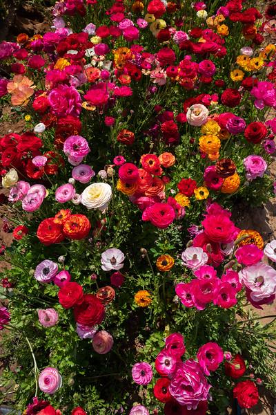 Spring Flowers A-157.jpg