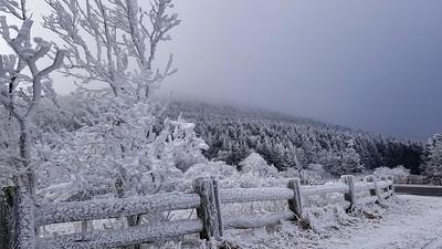 Roan Mountain - Rime Ice Phenomenon - Nov 27, 2018