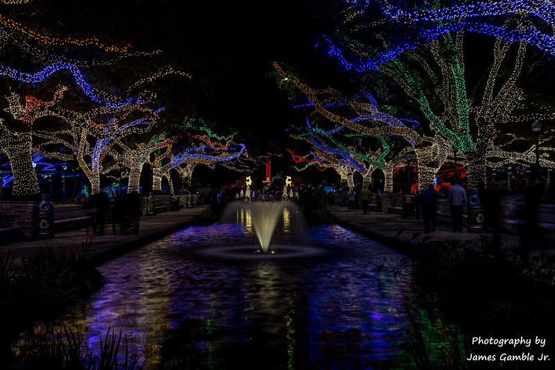 Houston-Zoo-Lights-2890.jpg