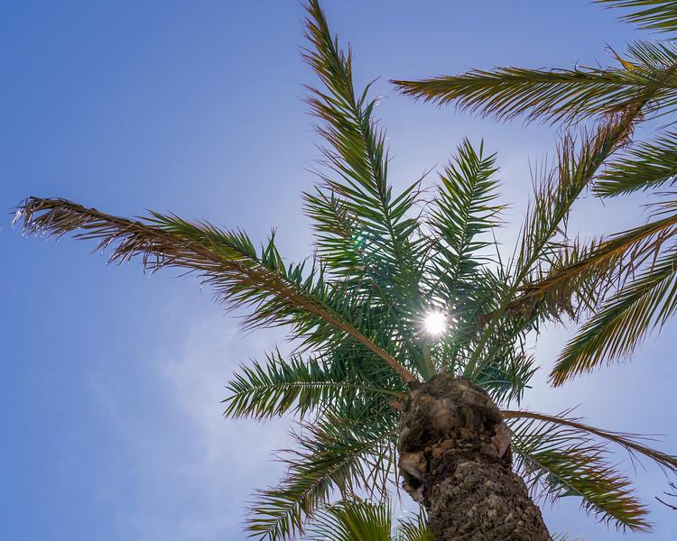 AZ Palm-1.jpg