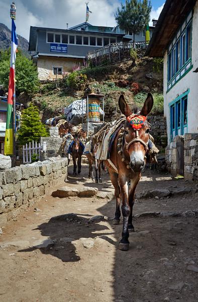 Nepal - EBC - 2E6B0938.jpg