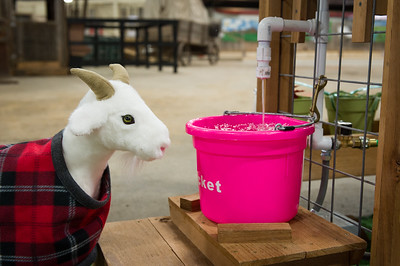 2018 Bexar County Livestock