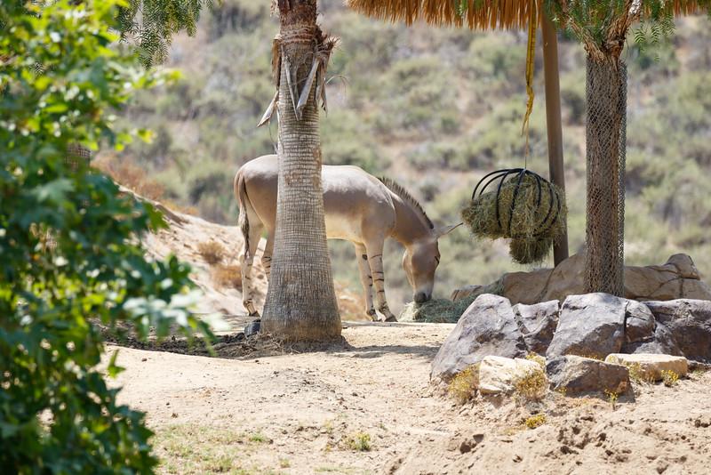 2016.06.01 Safari Park 0064.jpg