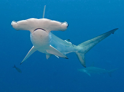 Galapagos 2006