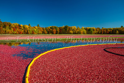 Wisconsin Cranberry Harvest