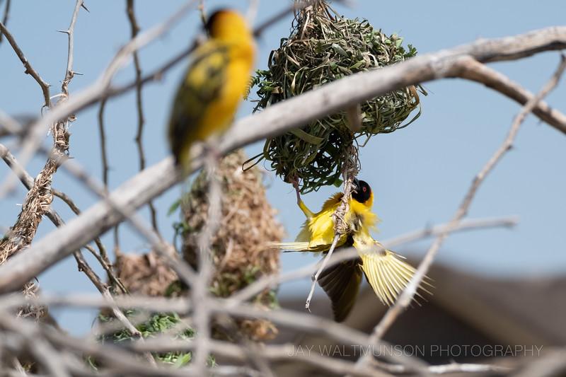 Jay Waltmunson Photography - Kenya 2019 - 070 - (DSCF0474).jpg