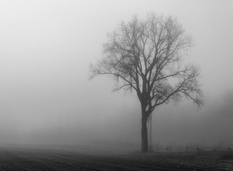 20101120__Foggy Morning__0166.jpg