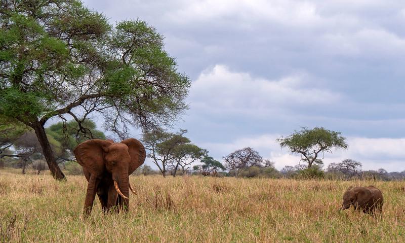 Tanzania-Tarangire-National-Park-Safari-Elephant-09.jpg