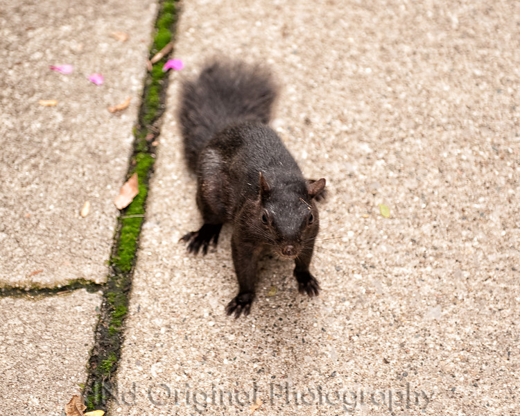 26 Michigan Trip 2012 - Squirrel (10x8).jpg