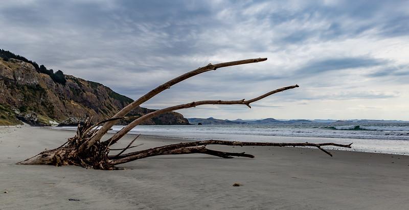 Strand bei der Aramoana