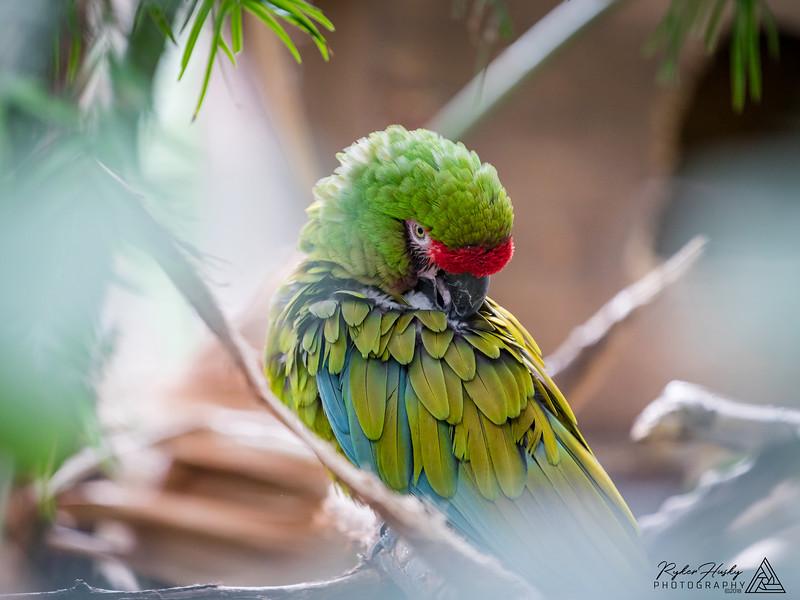 Santa Barbara Zoo 10-13-2018-084.jpg