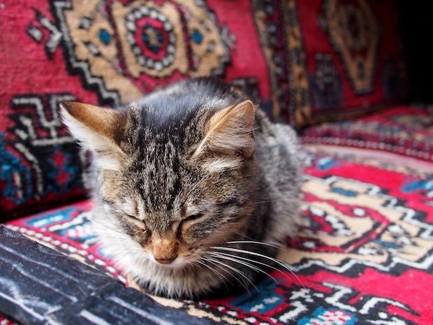 Sleeping cat in Istanbul