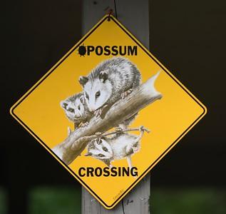 Playin Possum 50K - May 2018
