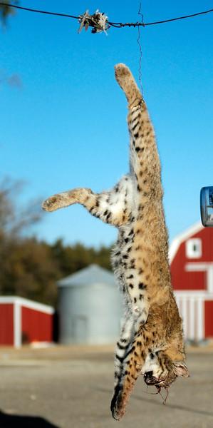 2011 Kansas Pheasant Hunt