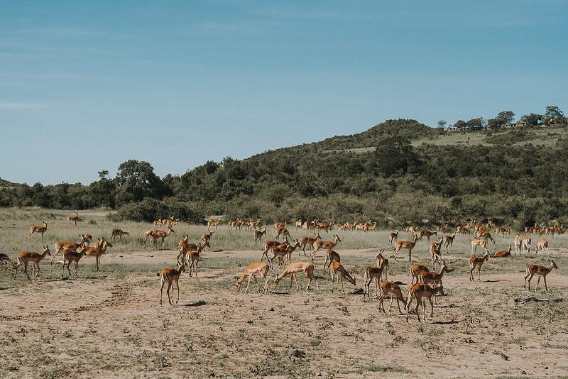 Tu-Nguyen-Destination-Wedding-Photographer-Kenya-Masai-Mara-Elopement-Doris-Sam-300a9.jpg