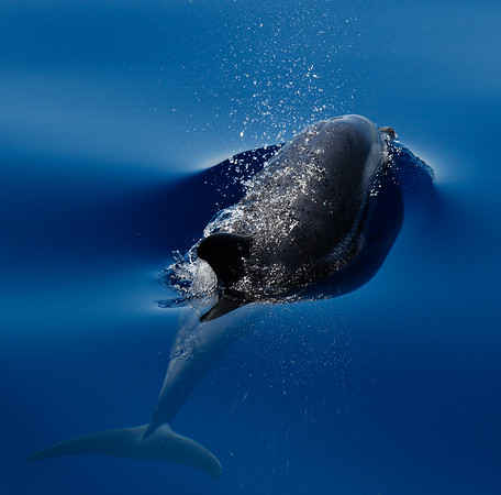 Italy Dolphins & Whales