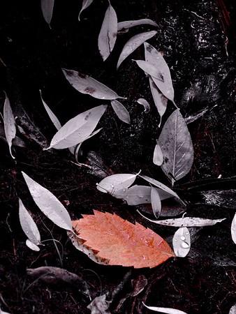 Lair o' the Bear Park - Autumn