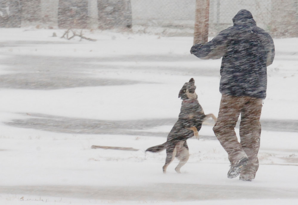 Description of . Charles Zink walks with his dog Princess in the former Omni Source site off of Clinton St., Fort Wayne, Ind., Wednesday, Dec. 26, 2012. (AP Photo/The Journal Gazette, Cathie Rowand)