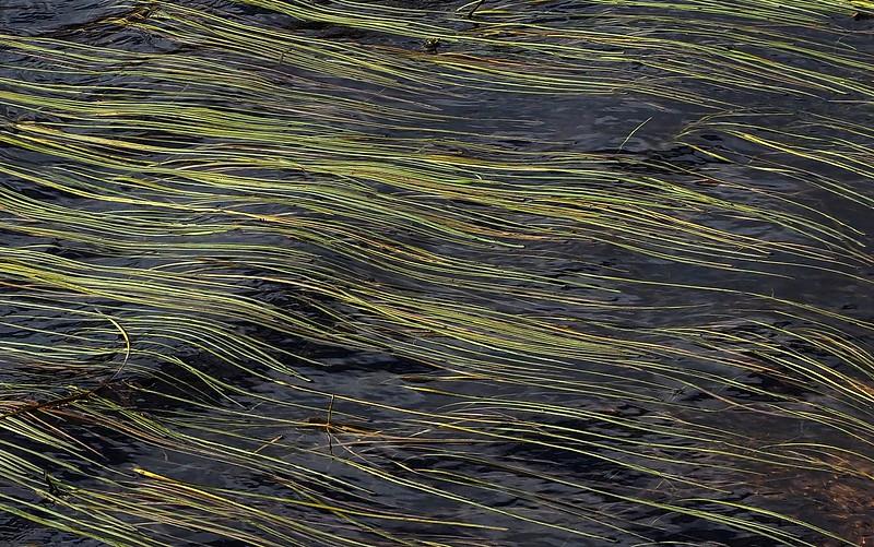 Drijvende egelskop Holtveen DV 03-10-18 (1).jpg