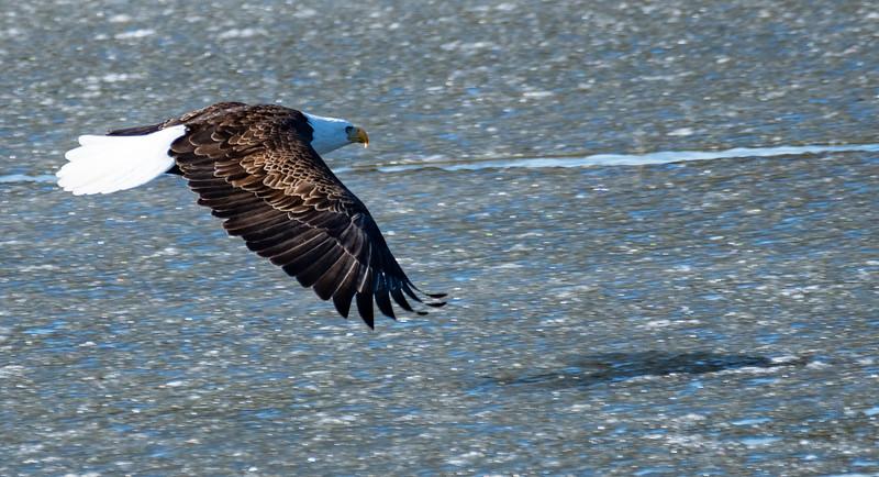 03-12-2021-eagles-13.jpg