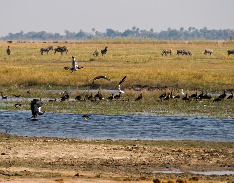 african scenery (25).jpg