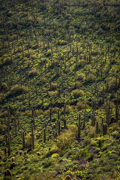 Green grove_1.jpg