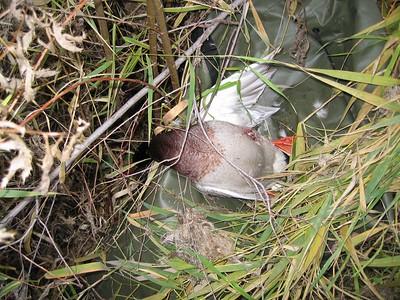 duck hunt 12-9-2004