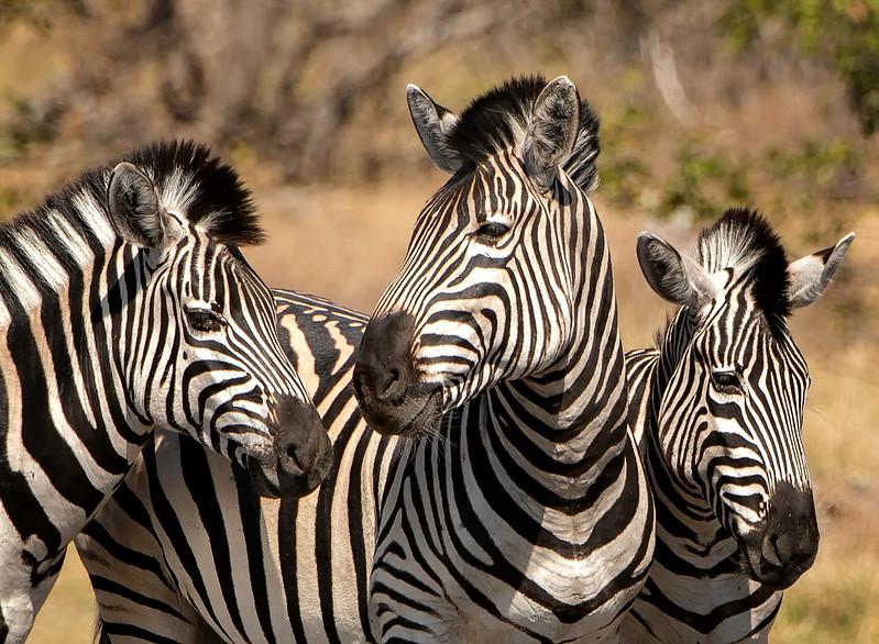 2014-08Aug-Okavango Masters-33-Edit.jpg