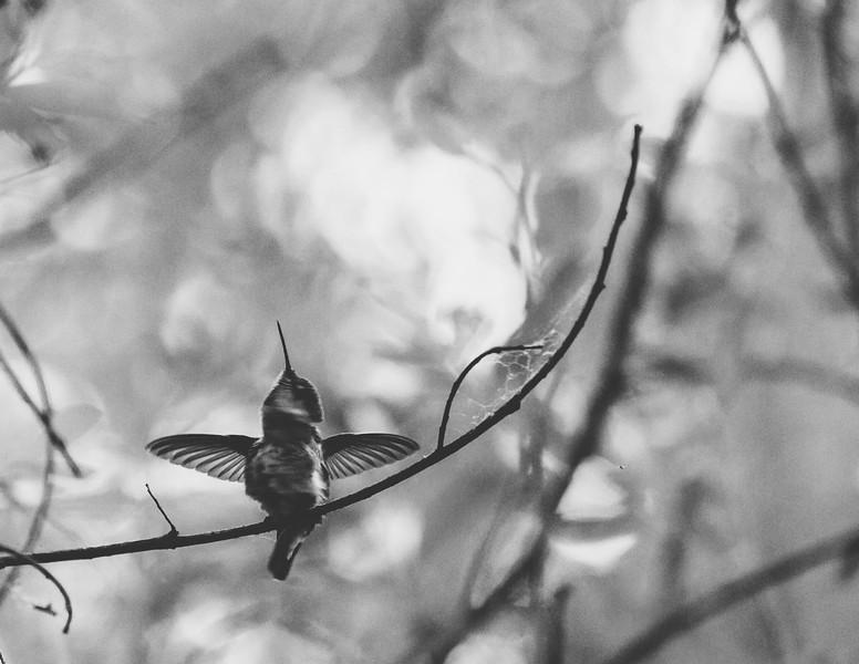 kaila_drayton_photography-6074.jpg