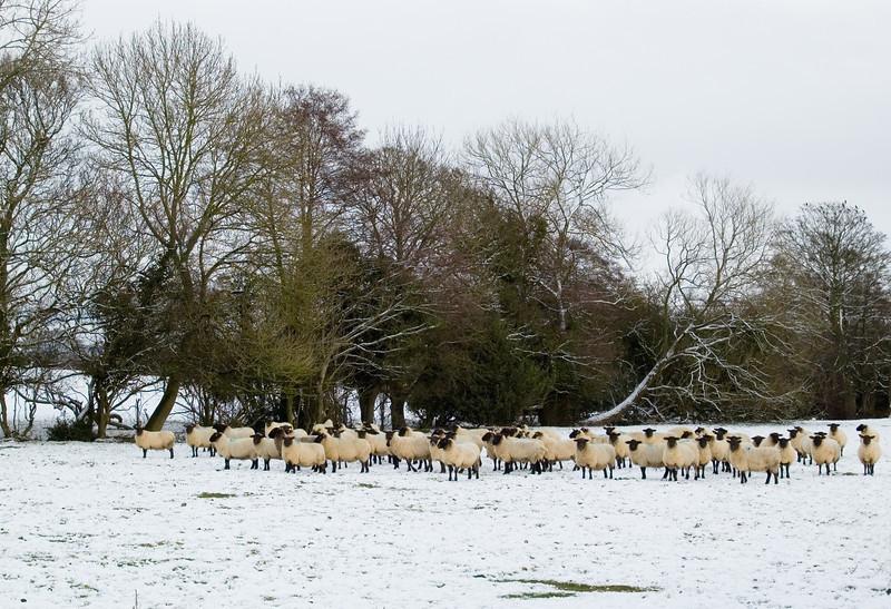 Watch Flock