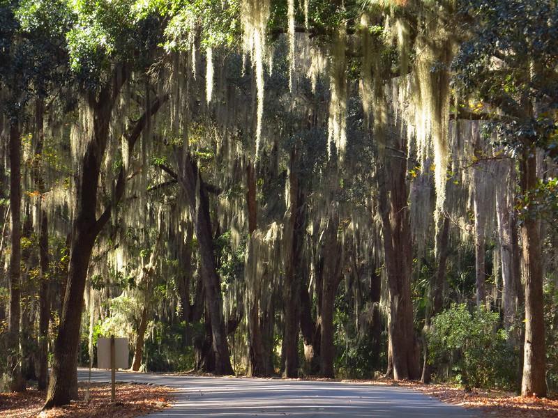Skidaway Island State Park, Savannah, Georgia (2).JPG