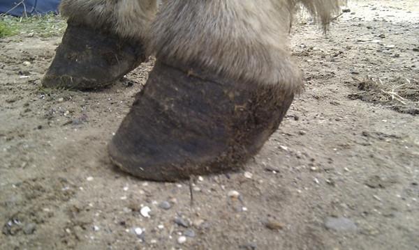 047-donkey 2-T1