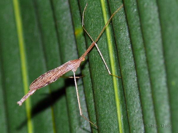 Crane & Scorpion Flies