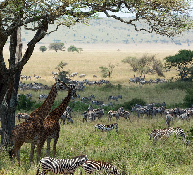 Tanzania_2D4A5297-Edit.jpg