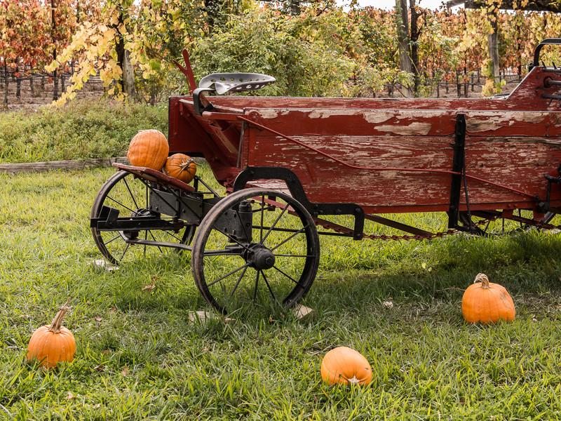 Manure Spreader with Pumpkins and Vineyard