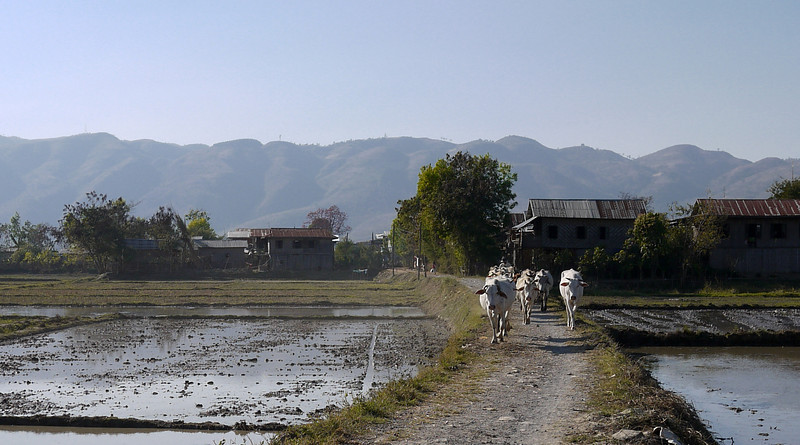 The rural villages around Nyaung Shwe, on Inle Lake, Burma (Myanmar).