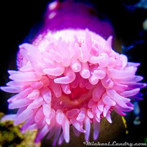 2009; Ripley's Aquarium @ Myrtle Beach
