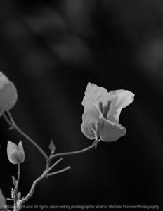015-flower-dsm-14jan09-cvr-bw-1200