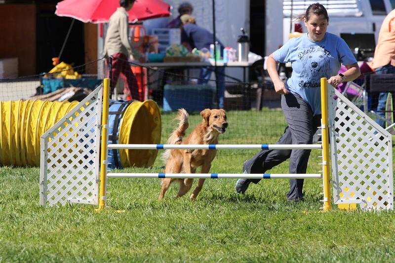 3-31-2018 Shetlant Sheepdog-3720.jpg
