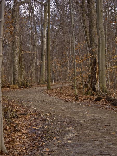 path 021811.jpg