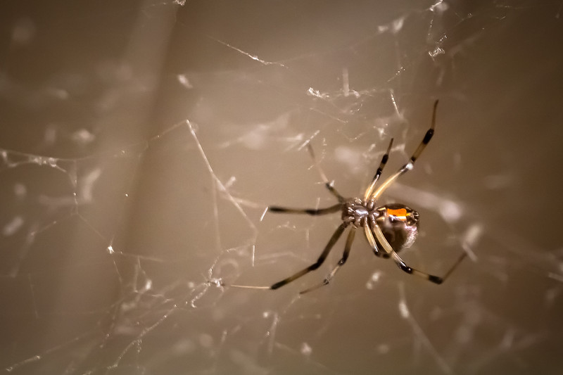 2013 06/13, 07/08: Spiders