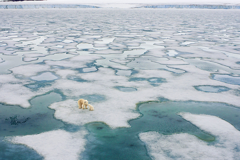 Polar bear and cub on pack ice.