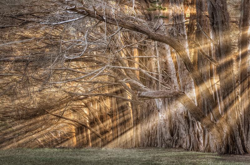 Light Rays, Study #2, Sea Ranch, California