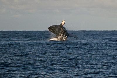 Maui Snorkeling Trip 01112011