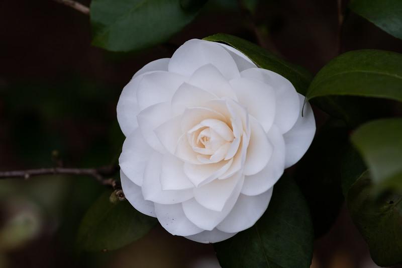 Flowers033019-846.jpg