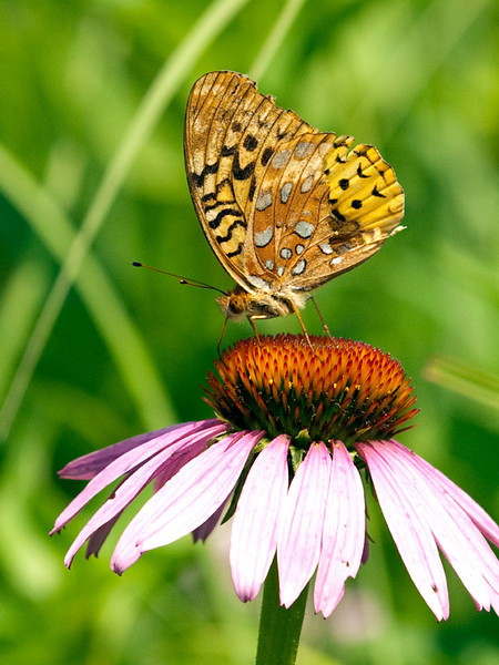 clip-015-butterfly-wdsm-24jun12-001-6908.jpg