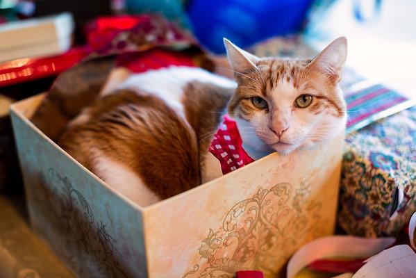 A Very Minjoe Christmas (eve)
