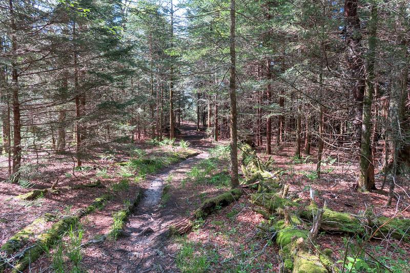 Mountains-to-Sea Trail -- 5,570'