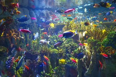 Boston Aquarium 2019