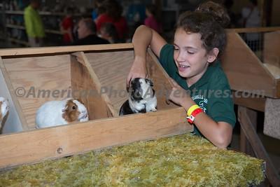 July 15 Guinea Pig Judging